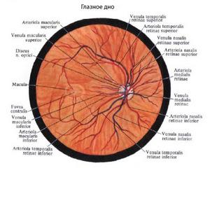 Атеросклероз сосудов головного мозга-питание
