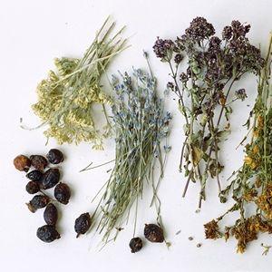 травяные настои от паразитов