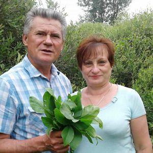 Секрети цілющих трав розкривають фітотерапевти Салії