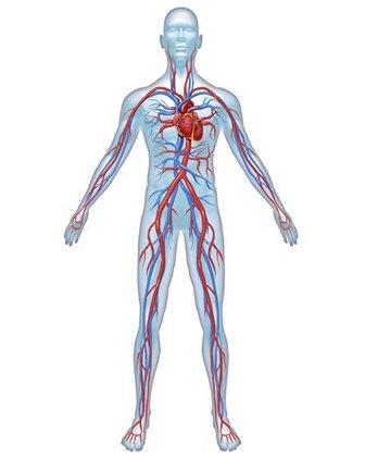 Важливо усунути судинні проблеми