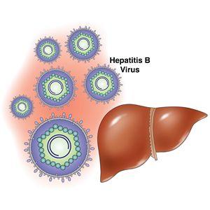 Гепатит В: оздоровление народными методами и диетой