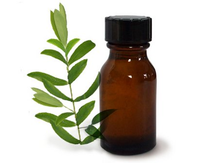 При кандидозе воспользуйтесь маслом чайного дерева